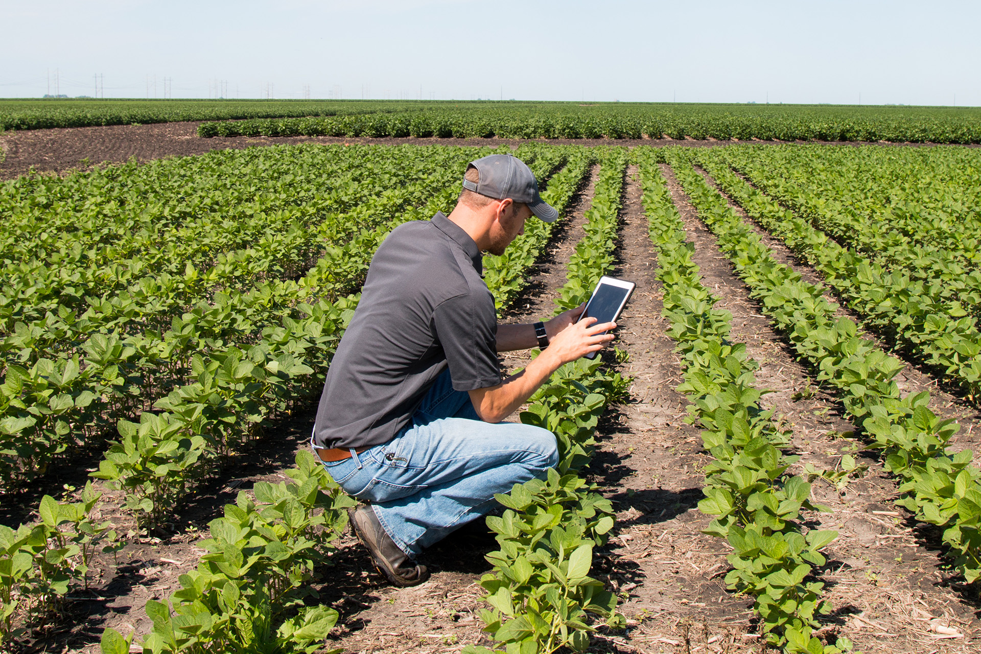 Farmer entering data on a tablet in a field